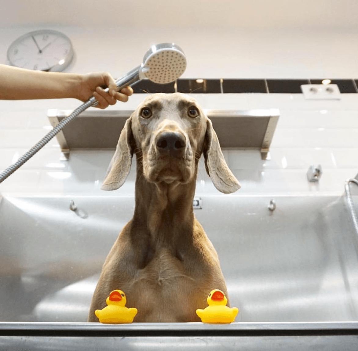 Mums Dogs, peluquería canina forma parte del Club Barcelonette ofreciendo un descuento de 20€ a las socias en el bono mensual de dos sesiones de peluquería por 40€